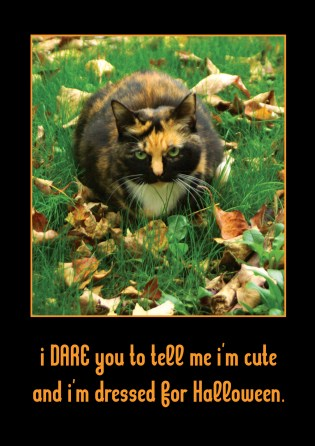 I DARE You Tortie Halloween Card