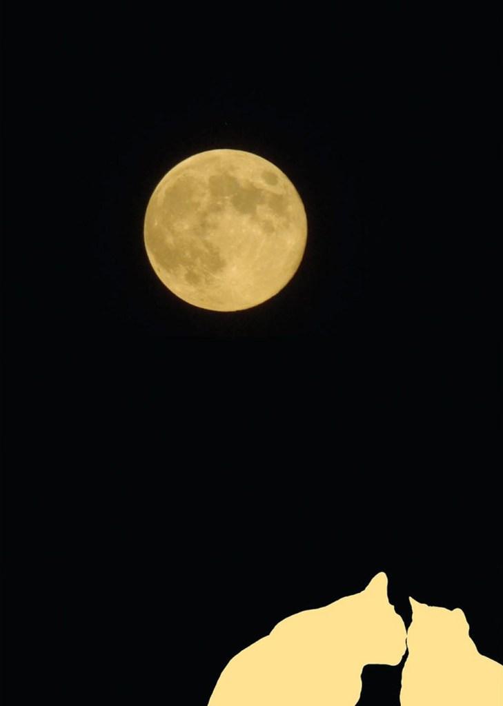 Silhouettes Full Moon Halloween Card