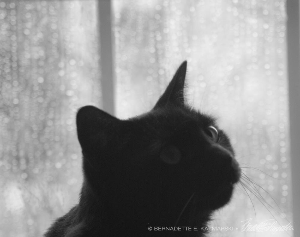 Of the Rain and Giuseppe, Searching
