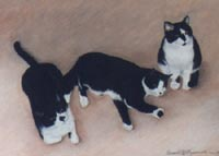 Three Black and White Cats