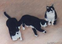 Three Black and White Cats
