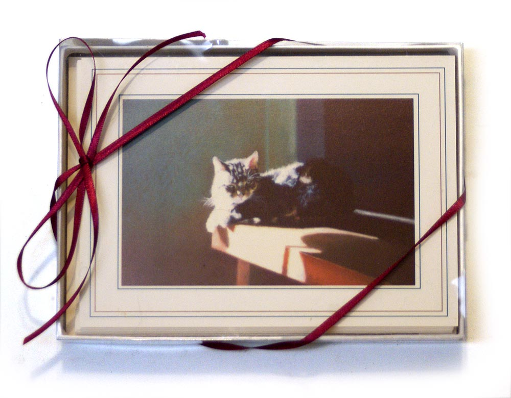 My Cats in the Sun Note Cards