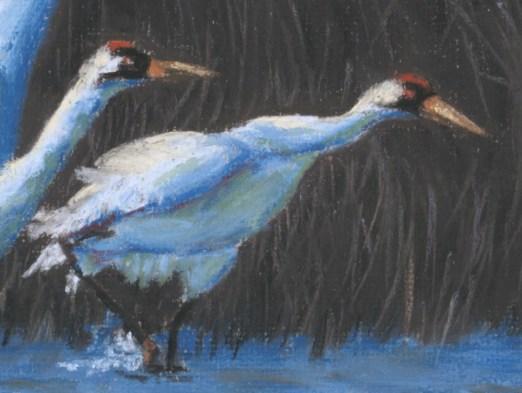 Detail of cranes
