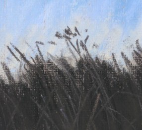 Detail of grasses
