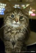 A kitten's distorted face.