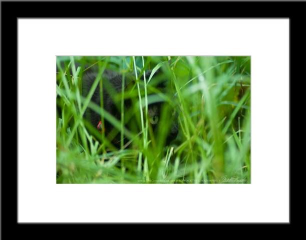 The Huntress: Intent, Photo