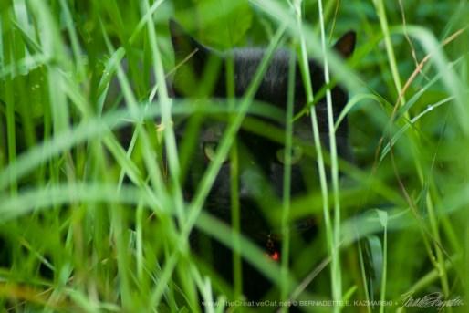 The Huntress: Listening, Photo