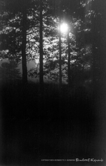 Moonlight Through the Pines