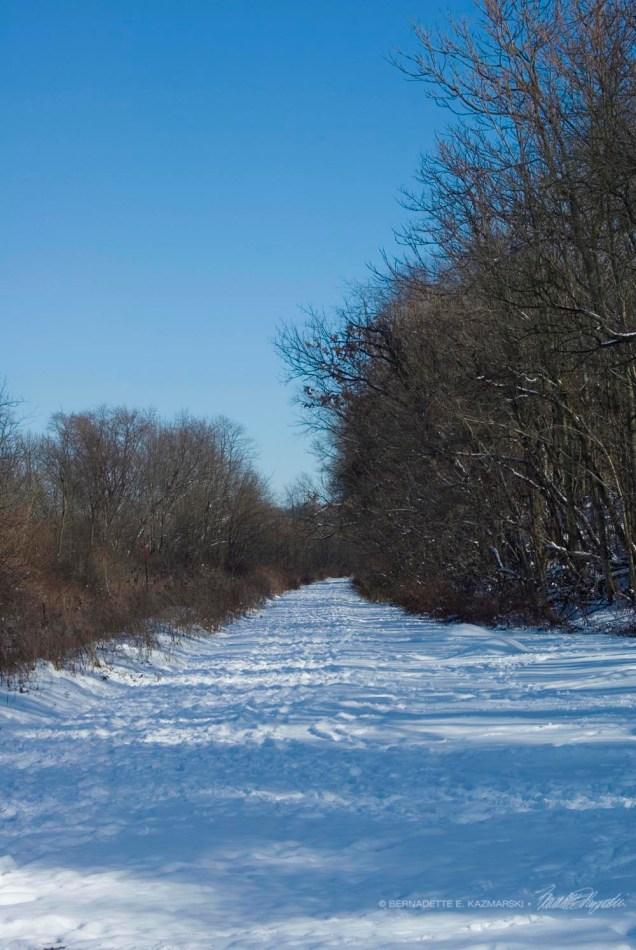 Trail-vertical-1000px