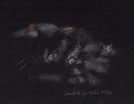 """Gentle Highlights"", pastel on black paper, 9"" x 7"" © Bernadette E. Kazmarski"