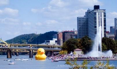 092813-duck-gathering