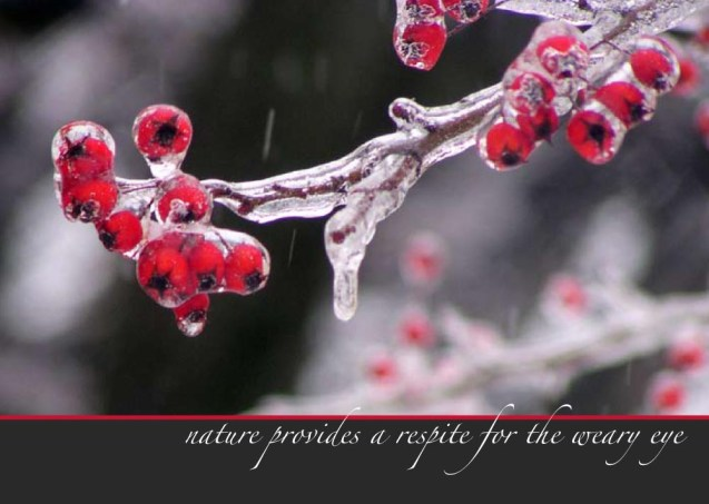 """Icy Berries, part of the """"Unexpected Berries"""" set of cards."""
