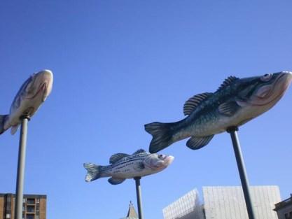 fishintheair