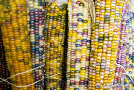 bedners-corn-1000px