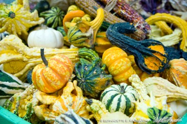 bedners-gourds3-1000px