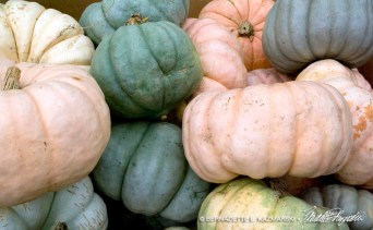 bedners-squashes-1000px