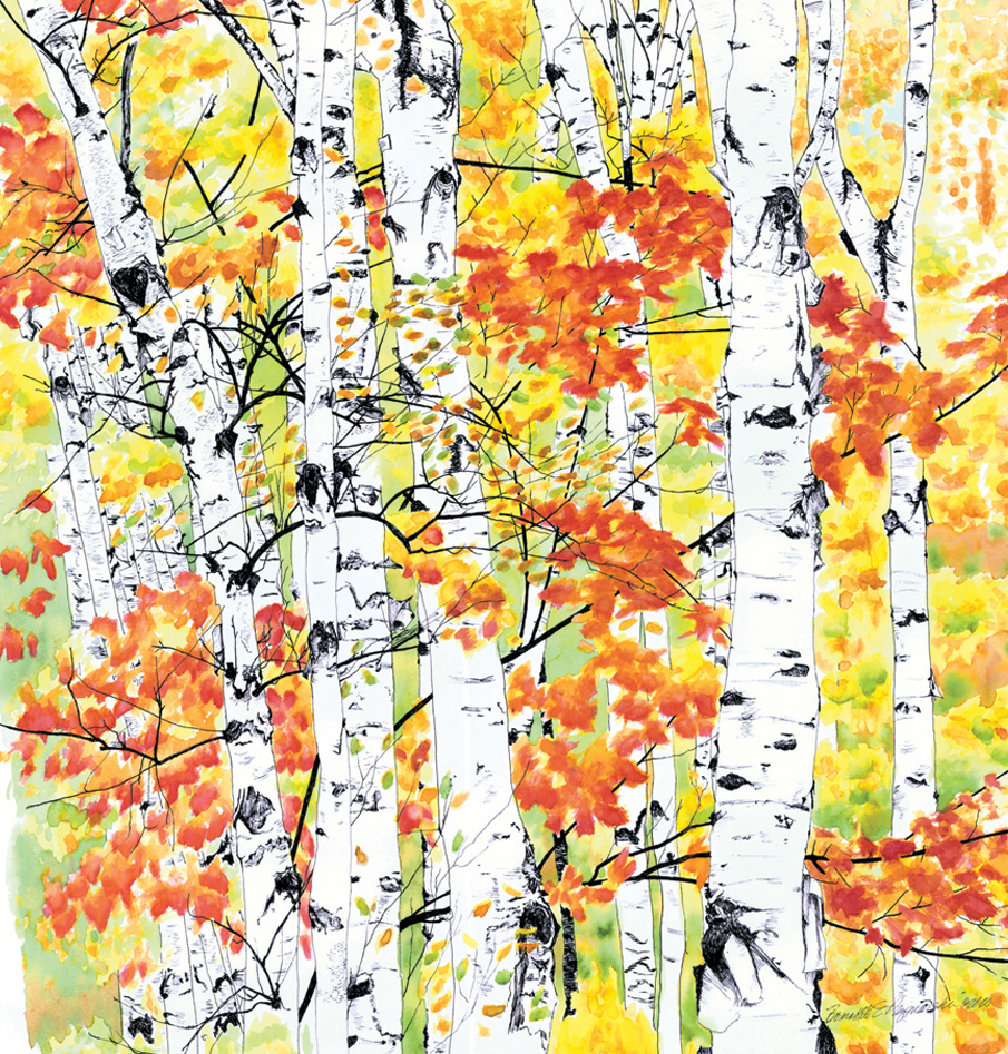 Birches 2, Radiance, ink and watercolor