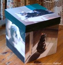 """""""My Cat in the Sun"""" keepsake box."""