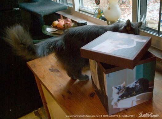 Ophelia inspects the box.