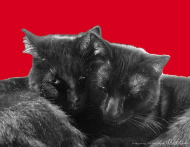Nuzzles and Purrrrrs for Valentine's Day!
