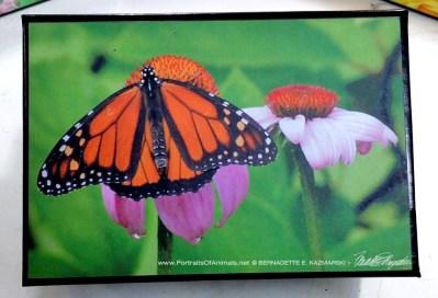 Monarch Habitat small gift box.