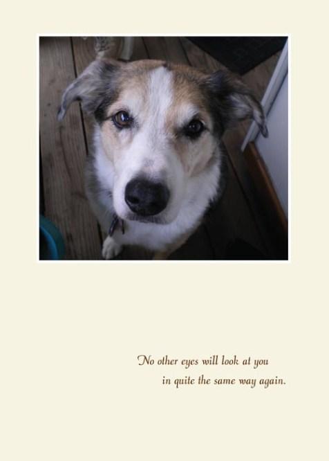 Tika Therapy Dog