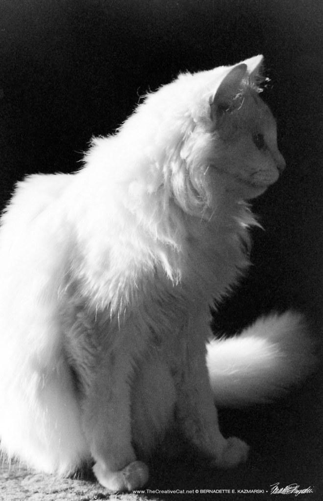 Sally Profile