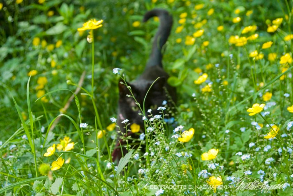 Mimi in Buttercups and Forget-me-nots