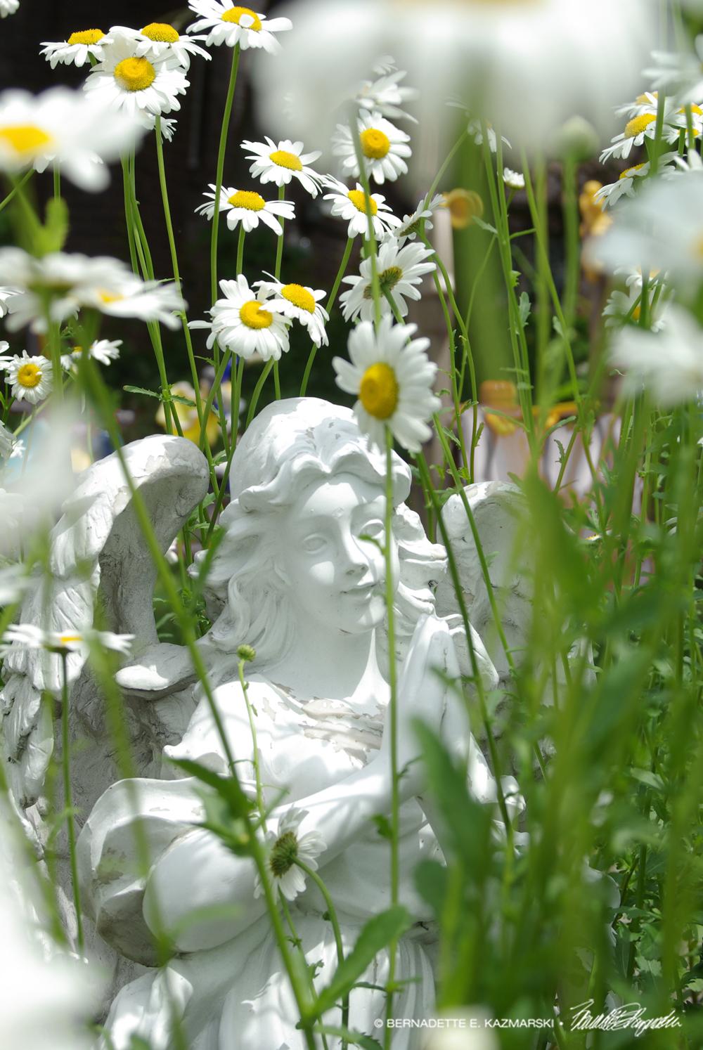 Angel Daisies
