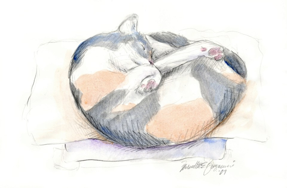 Peaches' Nap Spot, pencil with watercolor, 11″ x 7.5″, 2008 © B.E. Kazmarski