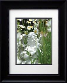 """Angel Daisies"", framed."