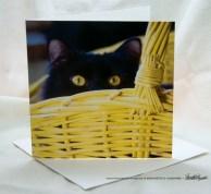 Surprise! Feline Photo Card