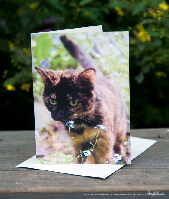 Kelly in Forget-me-Nots Feline Photo Card.