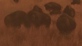 Bison-Shadows150dpi-adj-lowerleft