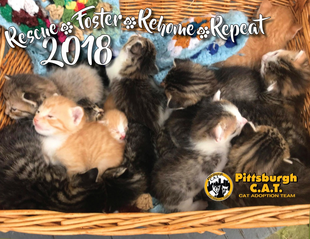 Rescue, Foster, Rehome, Repeat 2018: Pittsburgh C.A.T. 2018 Calendar