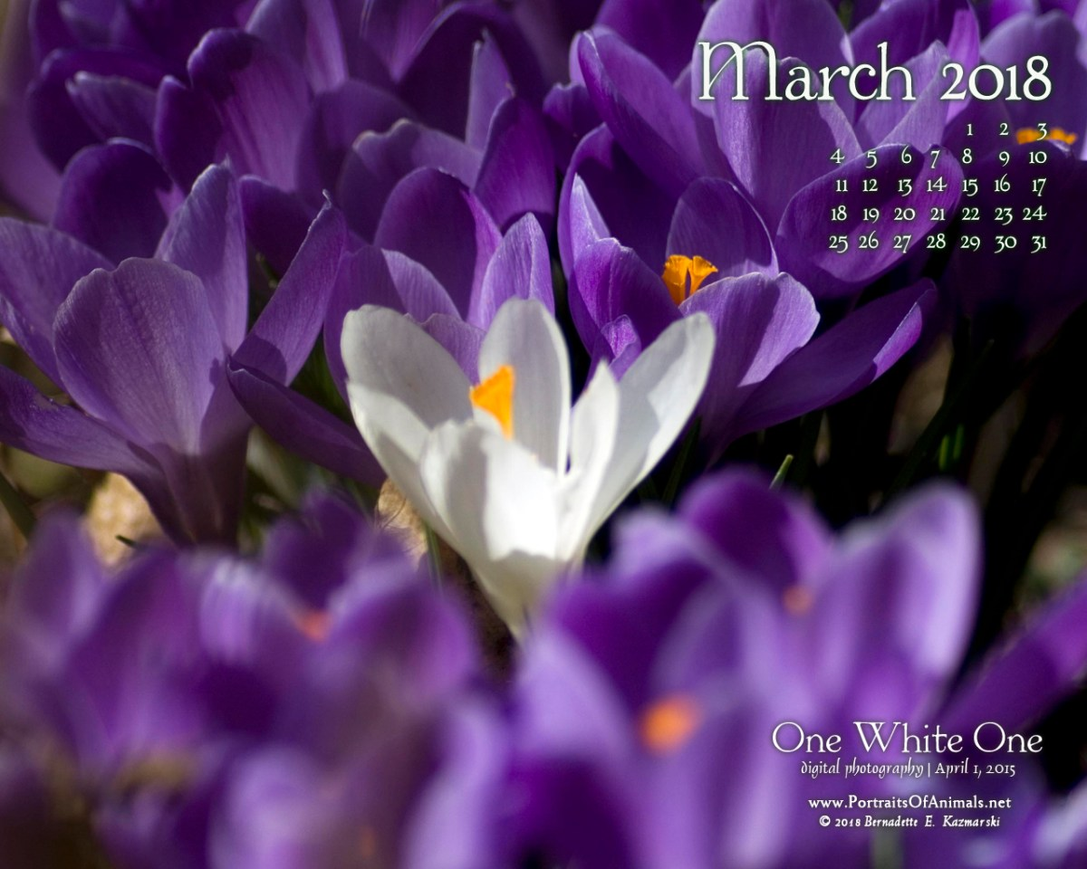 March Nature Desktop Calendar: One White One