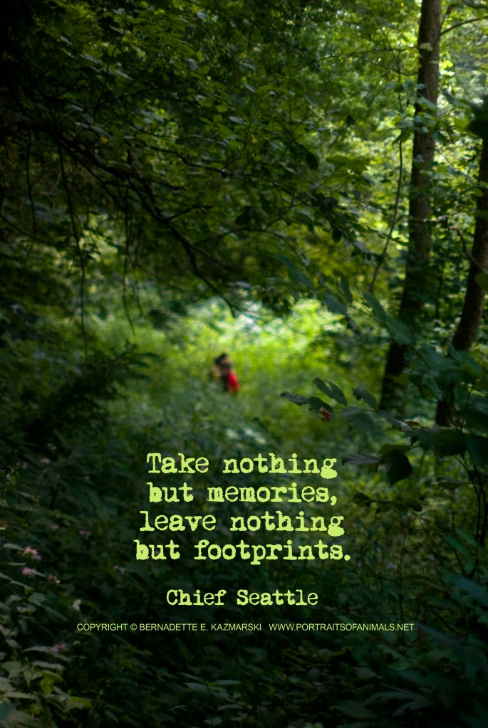 Photo Quote: Discovery
