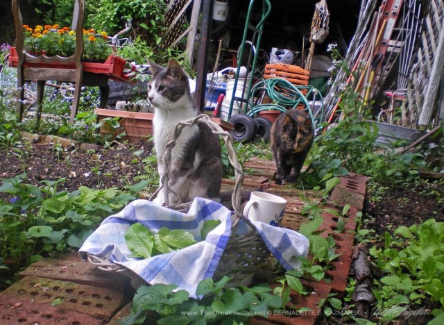 Namir and Cookie in the controlled chaos of my spring garden.