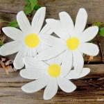 three daisies dish