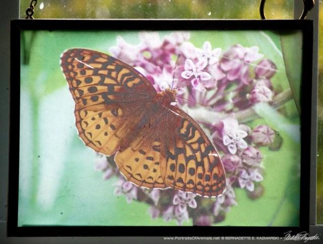 Butterfly on Milkweed Suncatcher