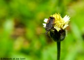Portraits-of-my-Land-Nectar-of-flower-4