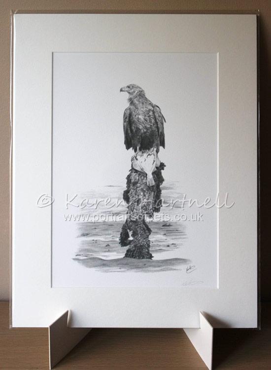 Print White-tailed Eagle Turquoise Z