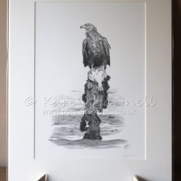 Print White-tailed Eagle Turquoise Z