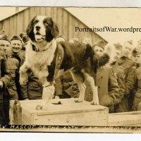 "Dogs of War: A Saint Bernard Mascot - 67th Coastal Artillery Company Veteran ""Barney"""