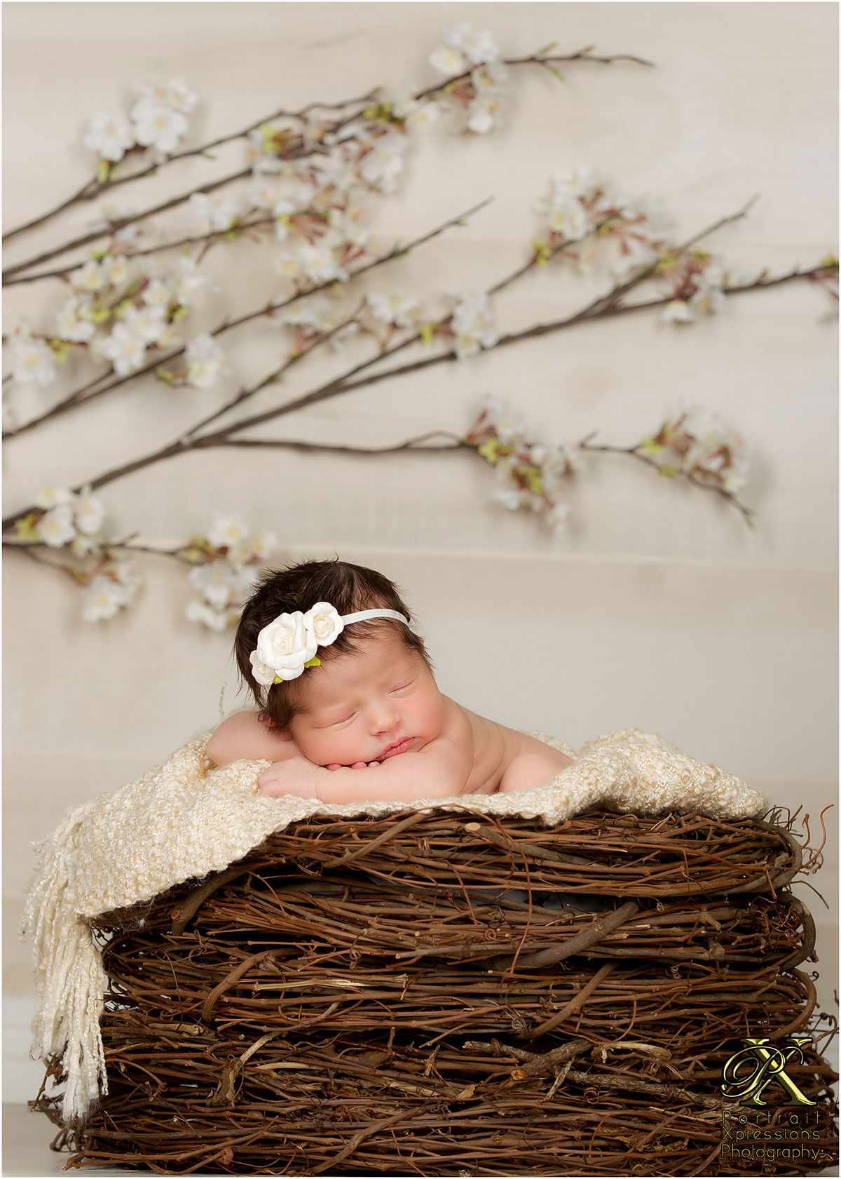 Newborn baby portraits in nest