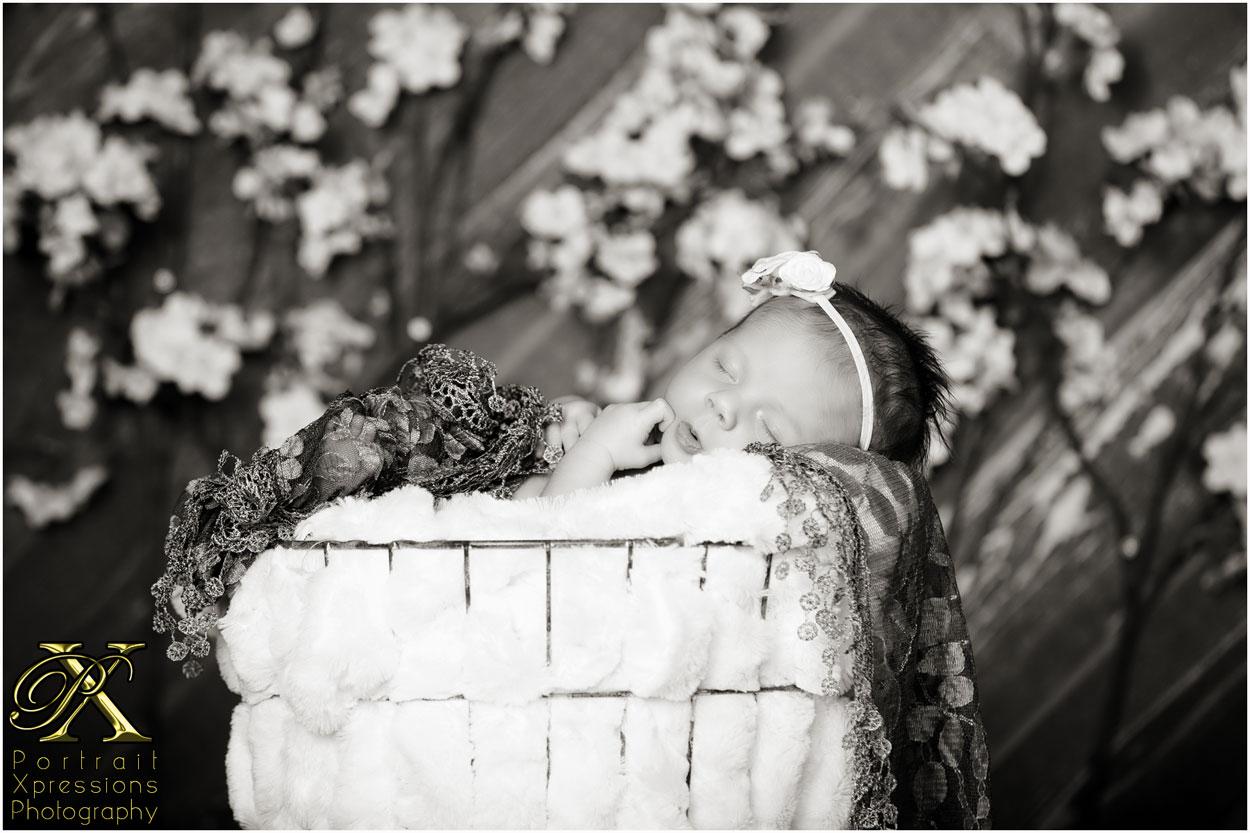 El Paso newborn baby portraits
