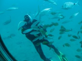 a great trip on the Yellow Submarine in Puerto Calero , and a lovely dive with a good friend.