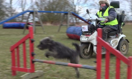 Dog Agility Julie Helps To Raise £1200 for MS Society