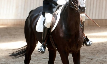 60 riders with intellectual disabilities to vie at the Special Olympics National Equestrian Competition