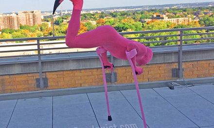 One-legged paralympian turns his disability on its head with hilarious flamingo Halloween costume